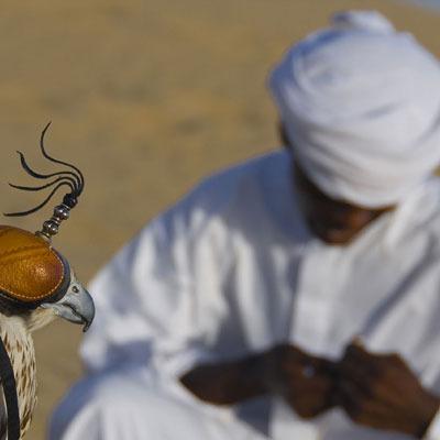 Arabian Falconry
